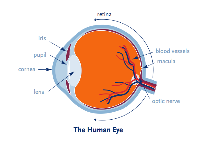 The Human Eye - Retina Ultra Widefield Imaging